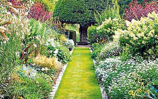 Дорожки, засеянные газонной травой