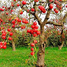 деревья осенью фото